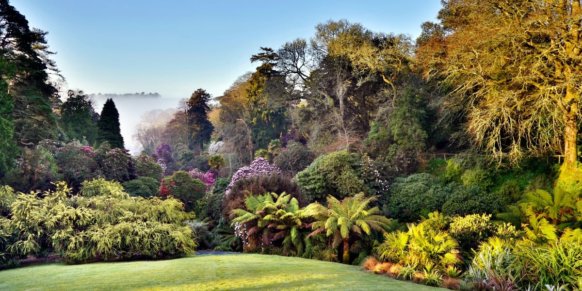 gardens-in-cornwall-falmouth-best-loved-trebah