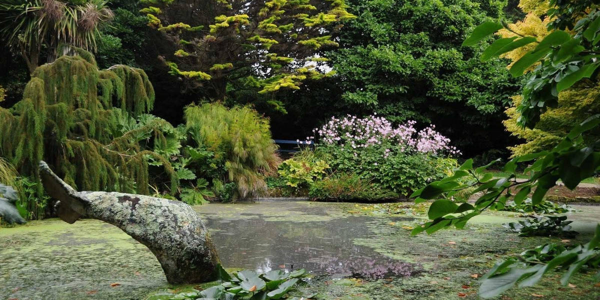 gardens-in-cornwall-falmouth-best-loved