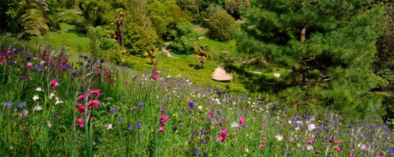 glendurgan-garden-falmouth-cornwall
