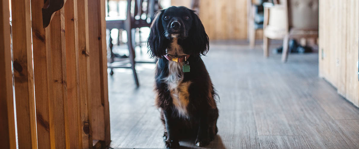 dog-friendly-pub-the-working-boat-falmouth-cornwall