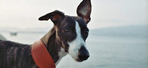 dog-friendly-beach-cornwall-cornish-beaches-