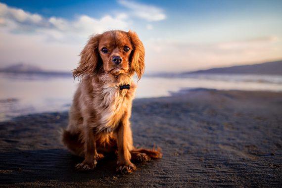 dog-friendly-beach-cornwall-cornish-beaches