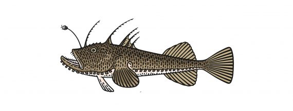 monkfish-recipe