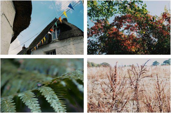 the-lizard-walks-frenchmans-creek-cornwall-helford-river-walk-autumn