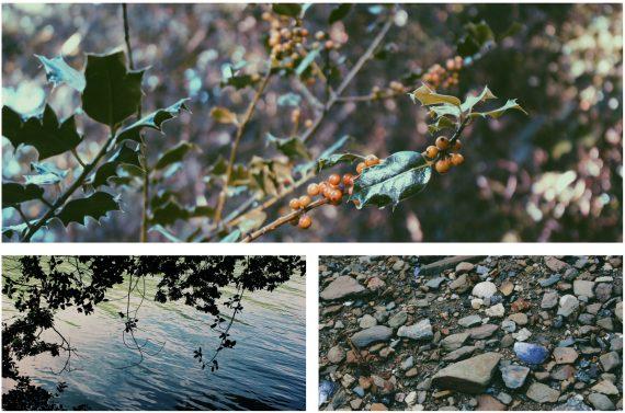 the-lizard-walks-frenchmans-creek-cornwall-helford-river-walk-kestle-barton
