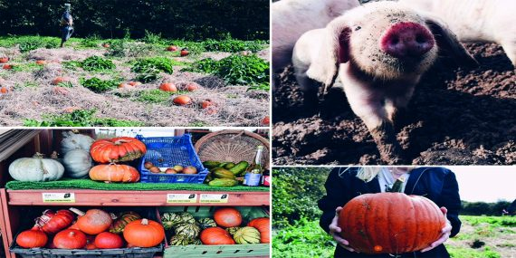 trevaskis-farm-pumpkin-patch-greenbank-hotel