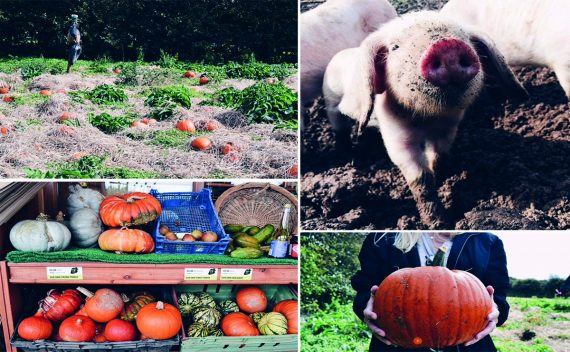 Trevaskis-Farm-Pumpkin-Picking