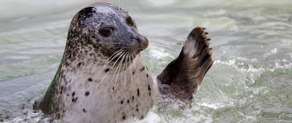 cornish-seal-sanctuary