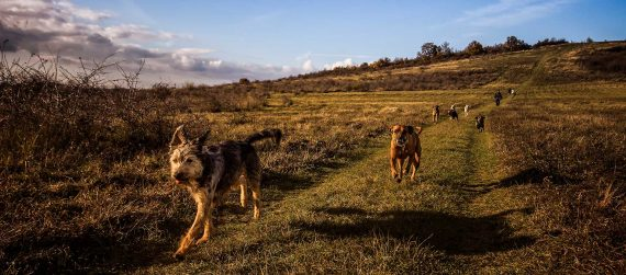 dog-friendly-garden-cornwall-cornish-gardens