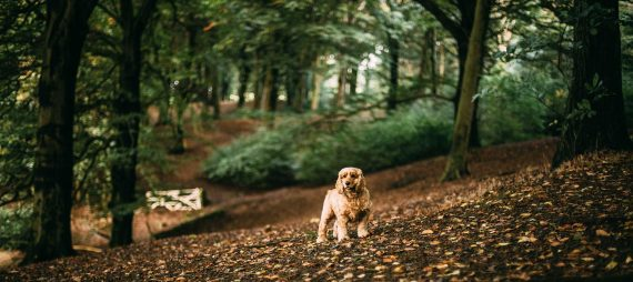 dog-friendly-gardens-in-cornwall-cornish-woodlands