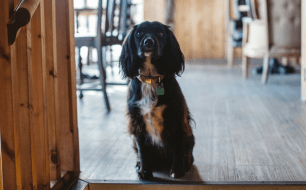 dog-friendly-pub-working-boat