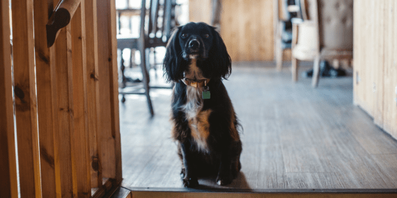 dog-friendly-pub-working-boat