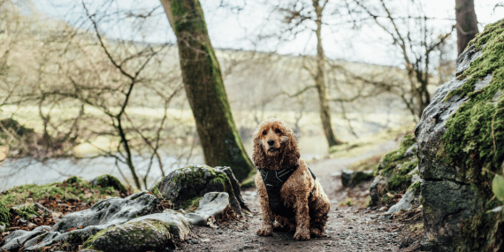 dog-friendly-cornwall-attractions-gardens-visits