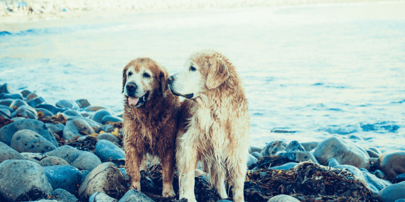 dog-friendly-attractions-cornwall