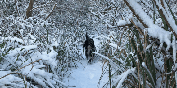 favourite-dog-walks-cornwall