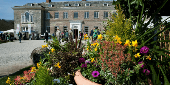 spring-flower-show-cornwall-april