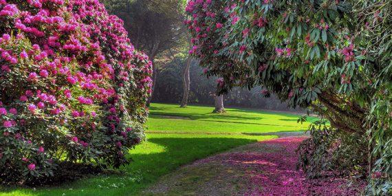 tregothnan-estate-gardens-truro-cornwall