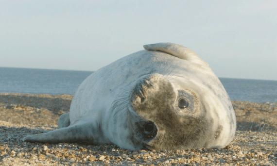 cornish-wildlife-sea-life-cornwall-seal