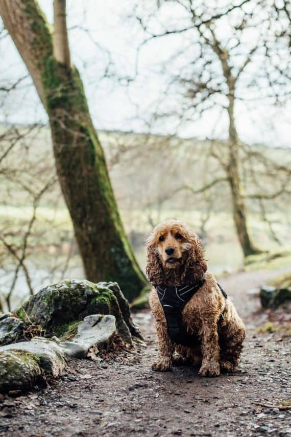 dog-friendly-cornwall-adventure-explore-stay-greenbank-hotel
