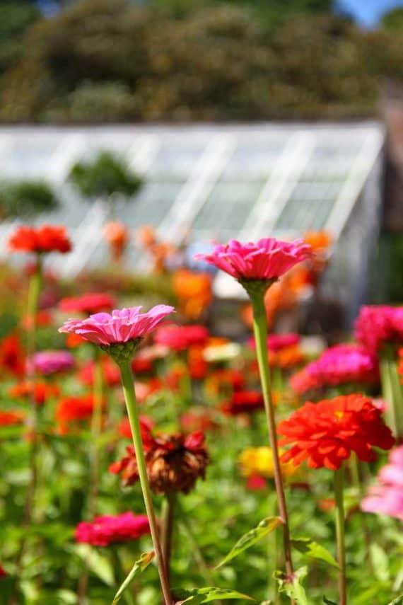 flowers-at-lost-garden-of-heligan-floral-wild-flower-greenbank-hotel-garden-break