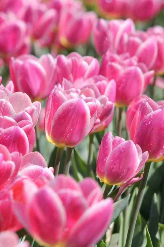 garden-break-at-the-greenbank-hotel-flowers-florist-bloom