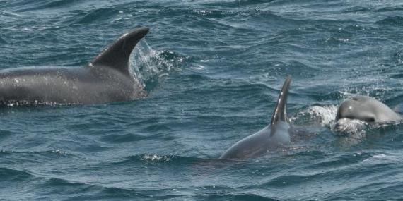 matt-slater-Marine-Awareness-officer-Cornwall-Wildlife-Trust