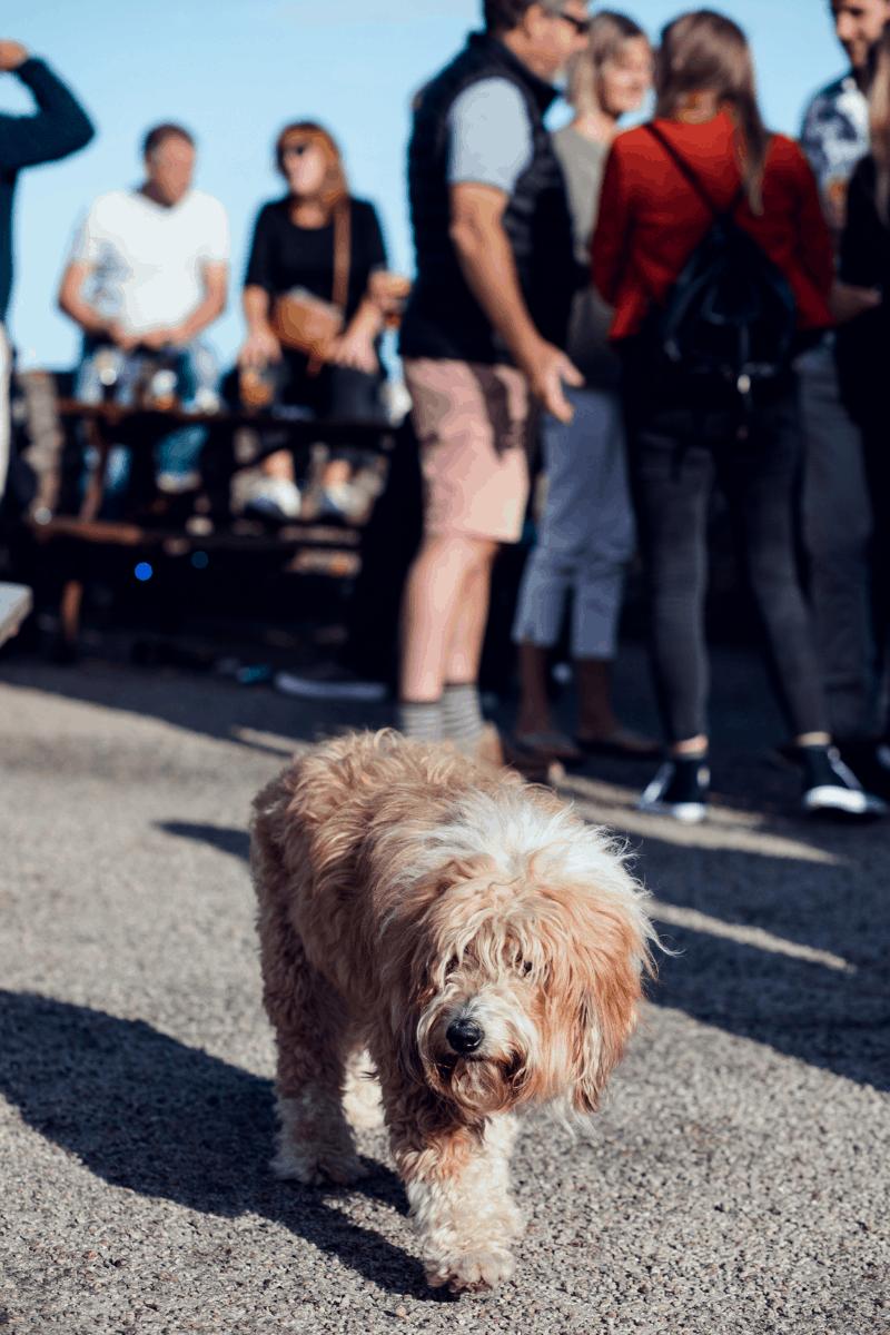 falmouth-sea-shanty-festival-2019-the-greenbank-hotel-cornwall-harbour-views-11