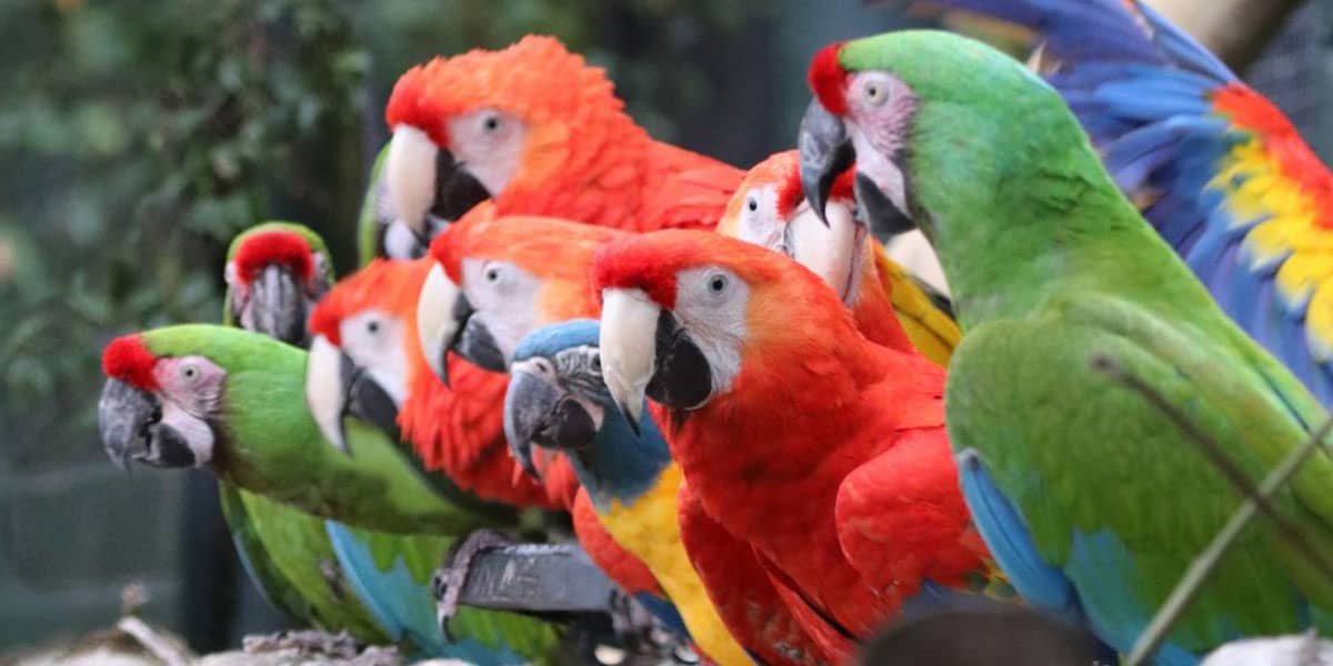 paradise-park-parrots-animals-the-greenbank-hotel