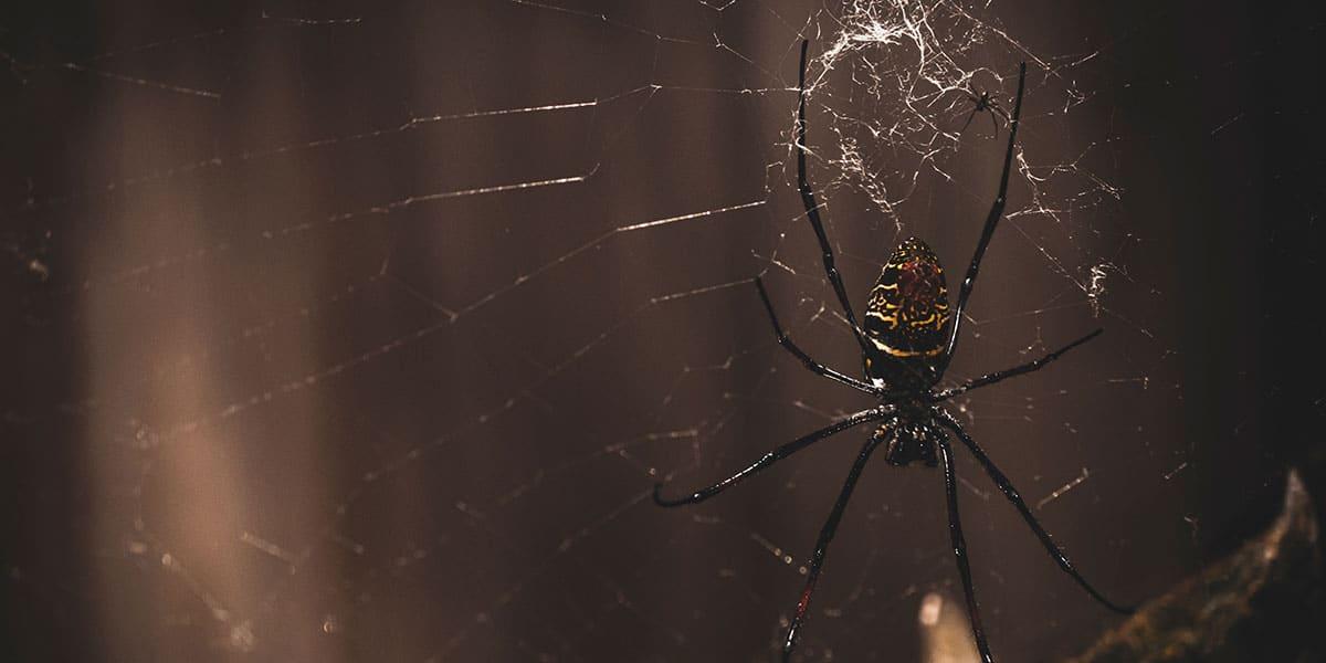 newquay-zoo-halloween-in-cornwall-2019-the-greenbank-hotel-falmouth