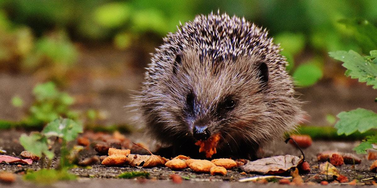 prickles-and-paws-wildlife-watch-cornwall-wildlife-trust-the-greenbank-hotel-falmouth