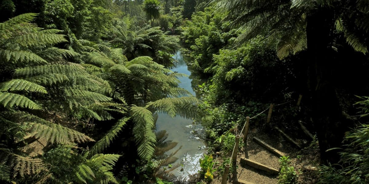 the-lost-gardens-of-heligan-historic-garden-tours