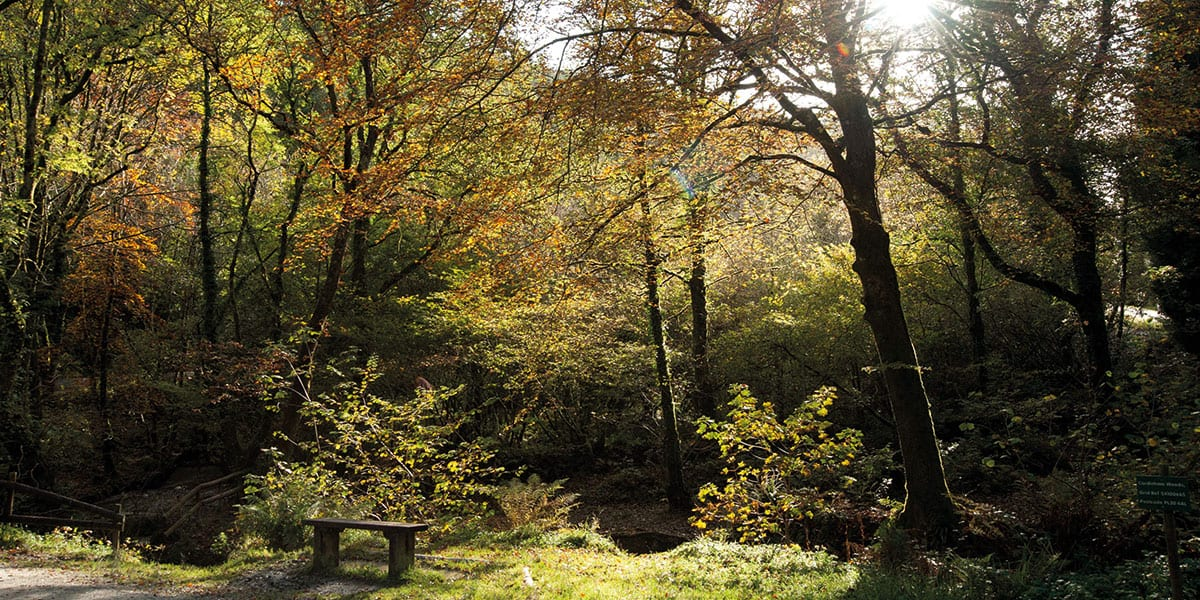 winter-walks-in-cornwall-the-greenbank-hotel-falmouth-cornwall-cornish-escapes-cardinham-woods