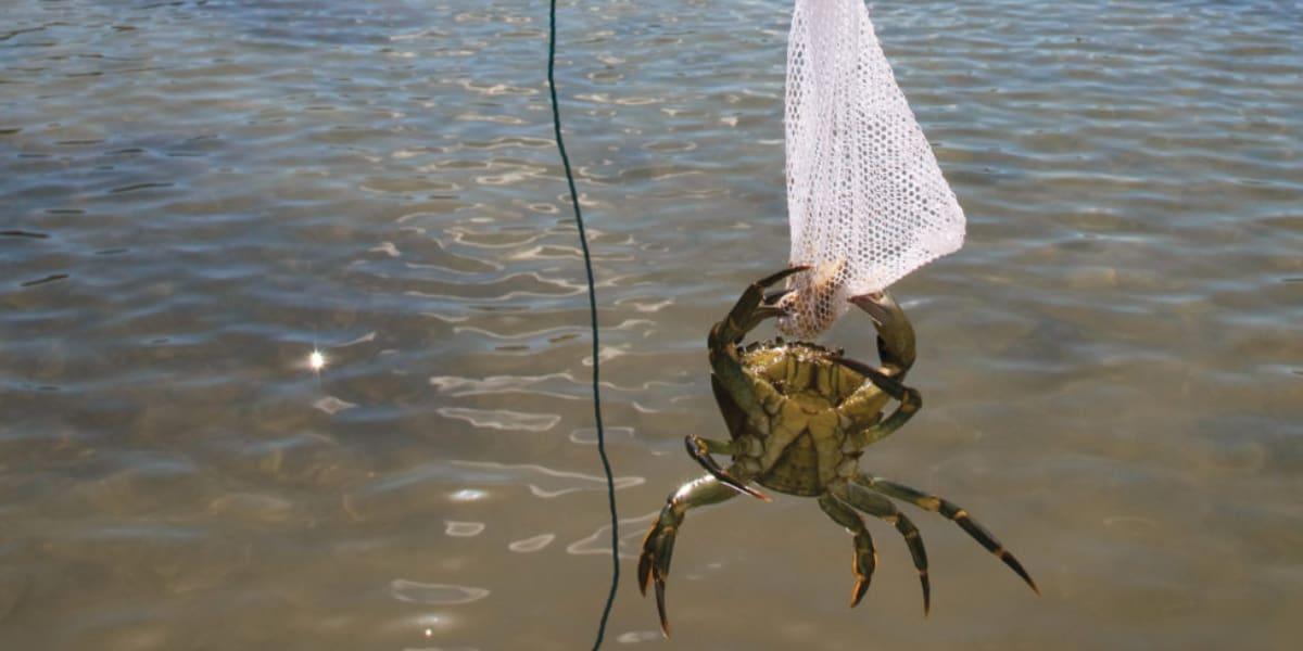 crabbing-falmouth-quay-cornwall