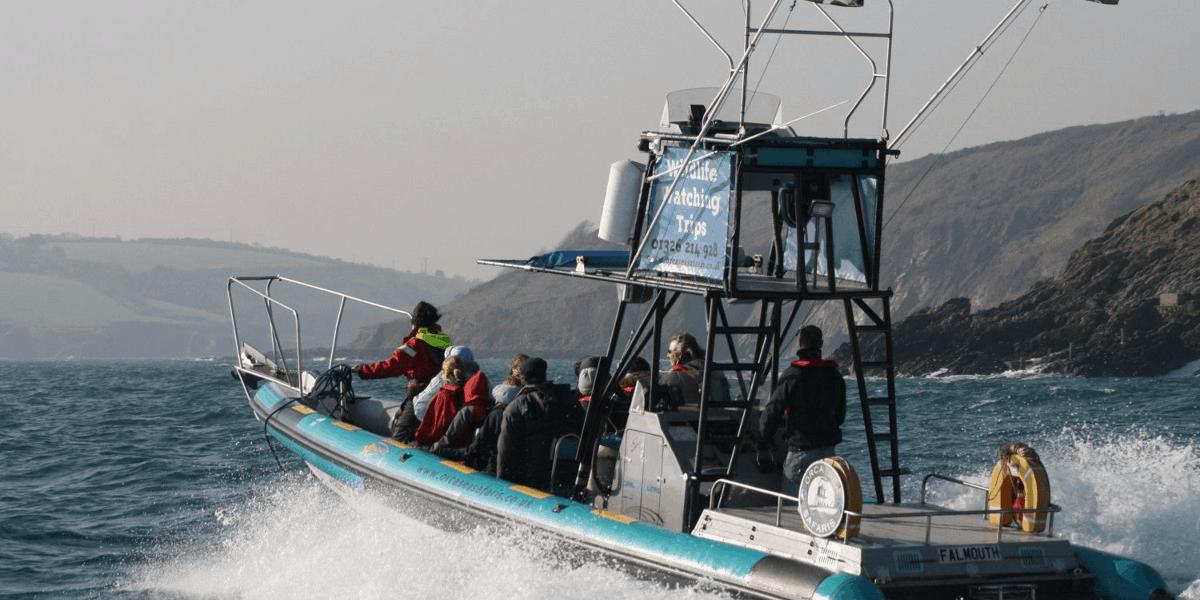 orca-sea-safaris-cornwall-family