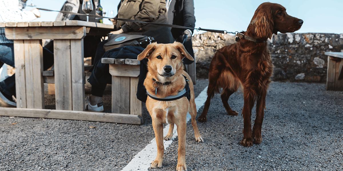 Working_Boat-the-greenbank-hotel-faqs-facilities-dog-friendly